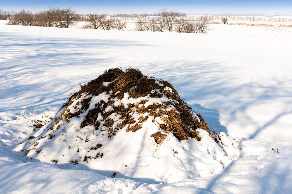 Cold composting in the winter for a sustainable spring