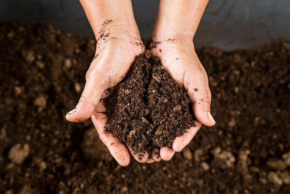 Organic compost to create organic soil for sustainable spring gardening and activities
