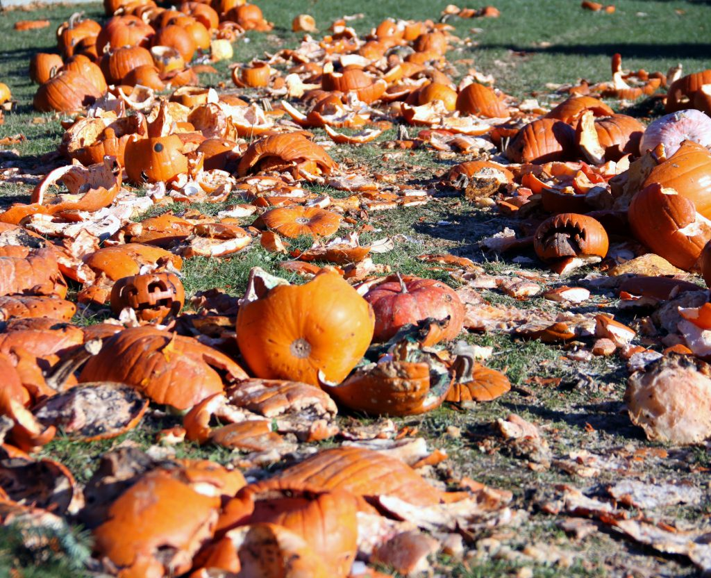 field of smashed pumpkins for composting